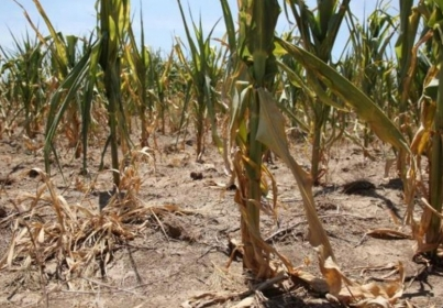 Cotații bursiere pentru această săptamână: prețul grâului românesc e cel mai mic